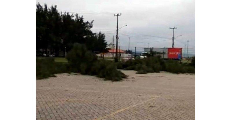Corte de 140 pinheiros no canto da praia da Vila gera revolta e SCPar Porto de Imbituba emite nota explicando derrubada das árvores