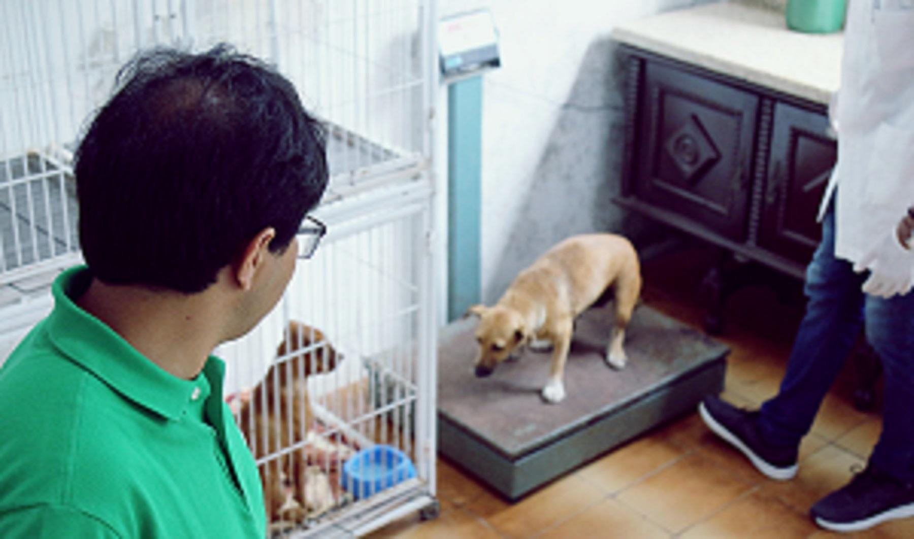 Imbituba: Prefeito Rosenvaldo Júnior acompanha de perto o castramento dos animais